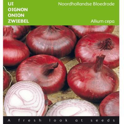 allium-cepa-noordhollandse-bloedrode