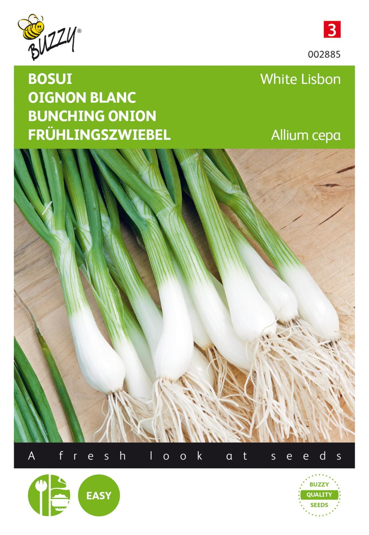 Allium cepa 'White Lisbon' plant