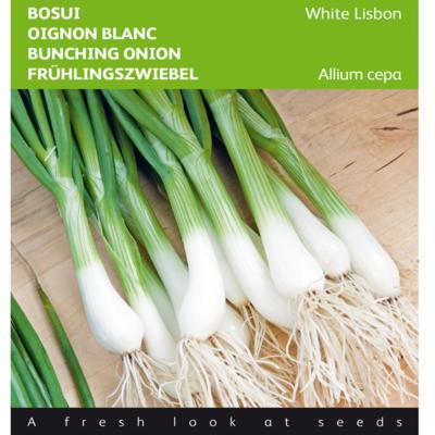 allium-cepa-white-lisbon