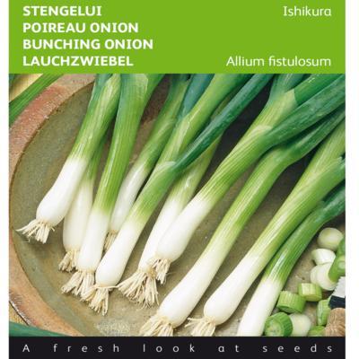 allium-fistulosum-ishikura