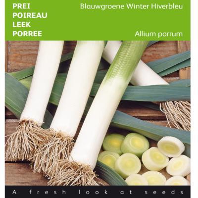 allium-porrum-blauwgroene-winter-hiverbleu