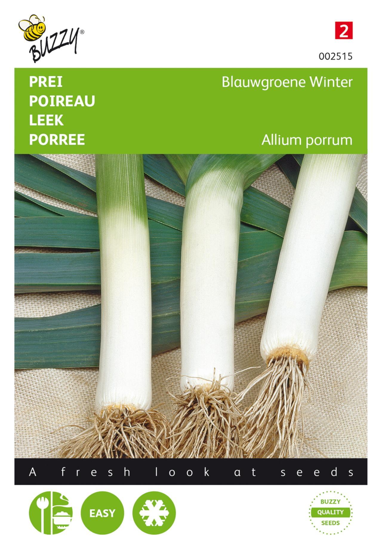 Allium porrum 'Blauwgroene Winter' plant
