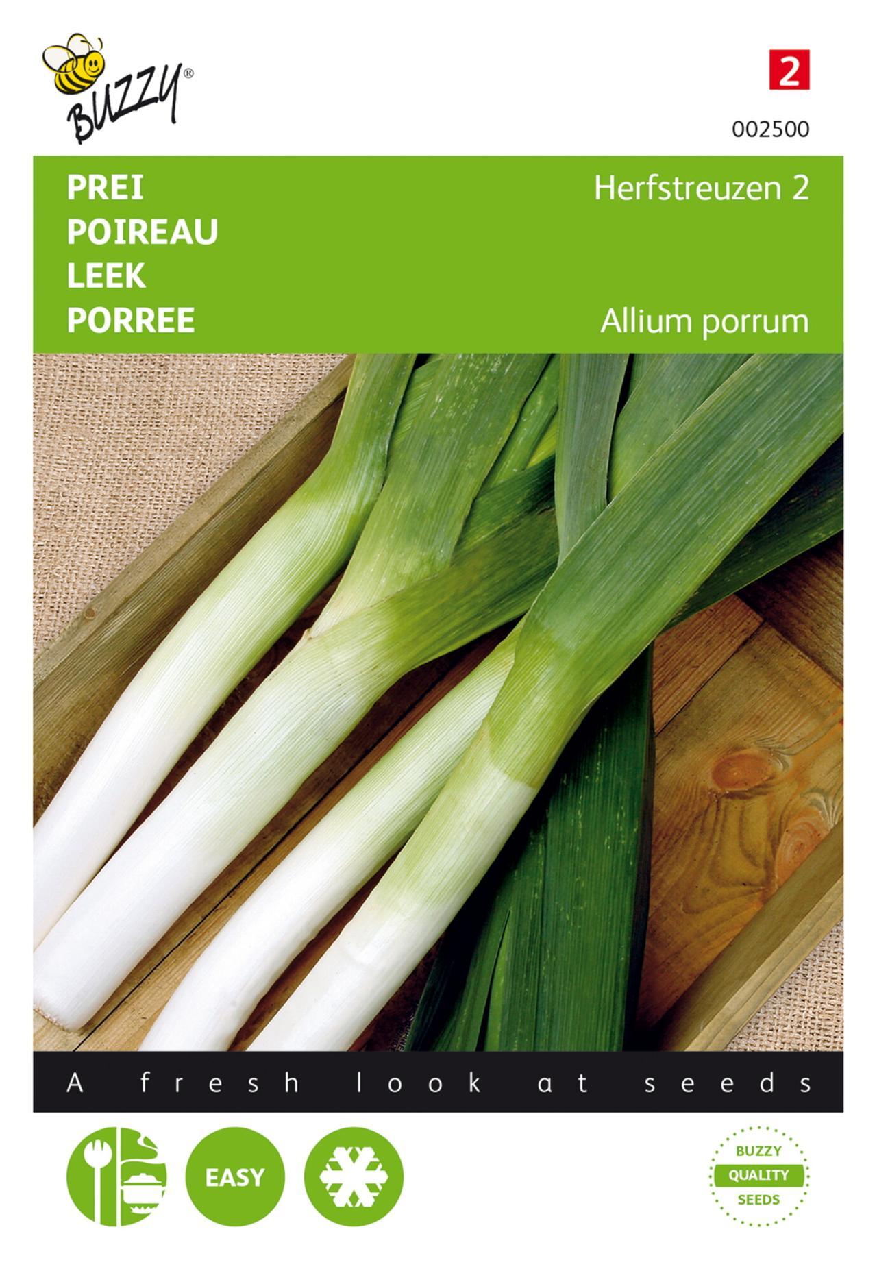 Allium porrum 'Herfstreuzen 2, Olifant' plant