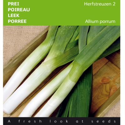 allium-porrum-herfstreuzen-2-olifant