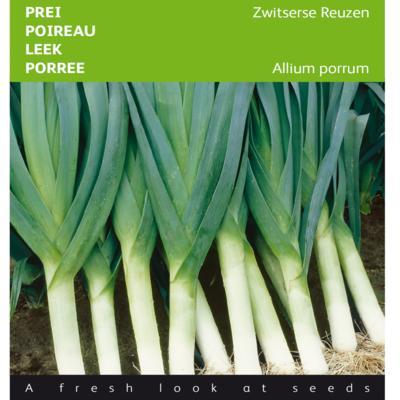 allium-porrum-zwitserse-reuzen