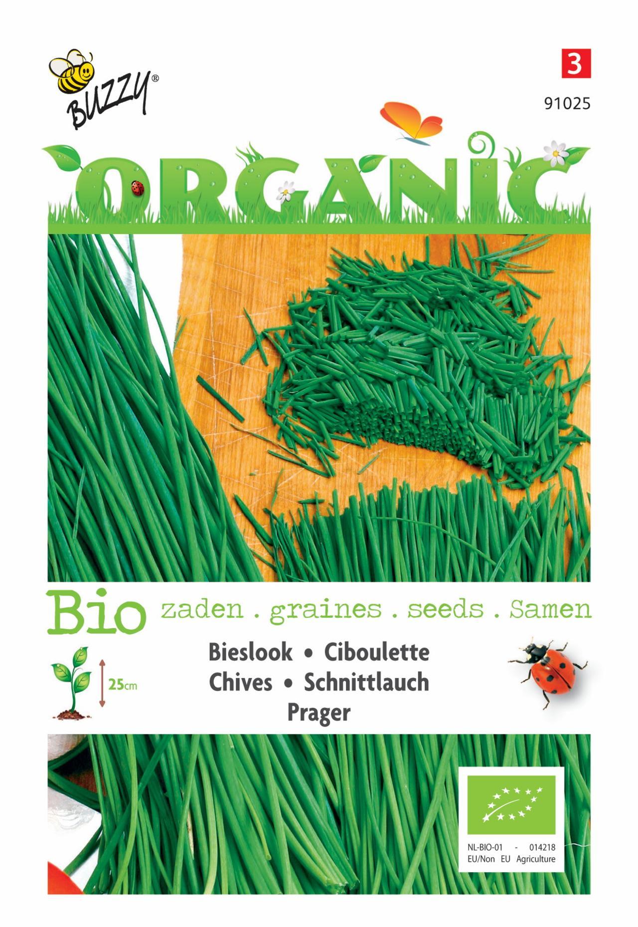 Allium schoenoprasum 'Prager' (BIO) plant
