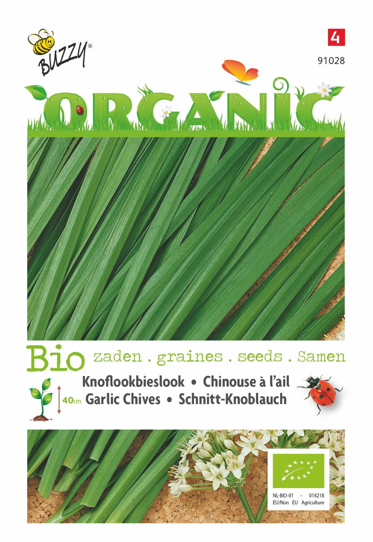 Allium tuberosum (BIO) plant