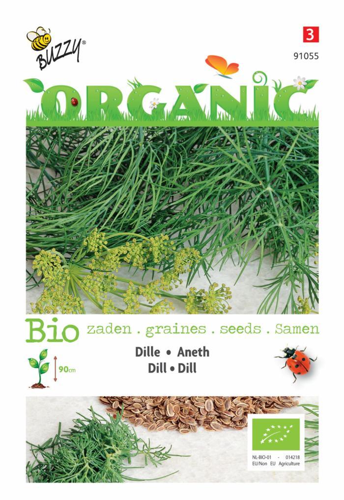 Anethum graveolens (BIO) plant