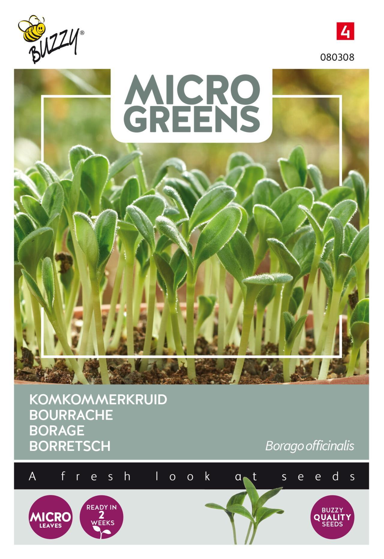 Borago officinalis (microgreens) plant