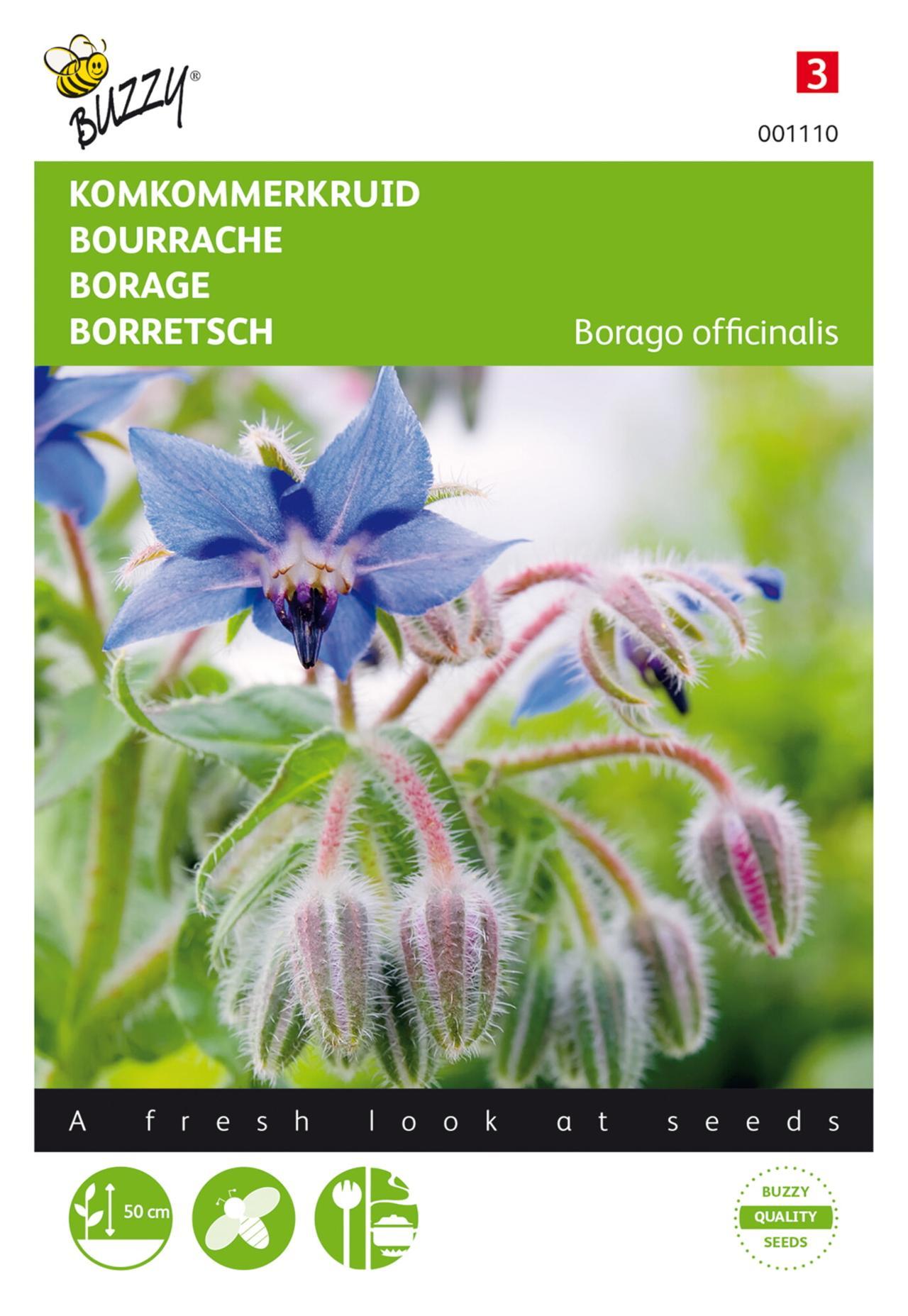 Borago officinalis plant