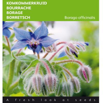 borago-officinalis