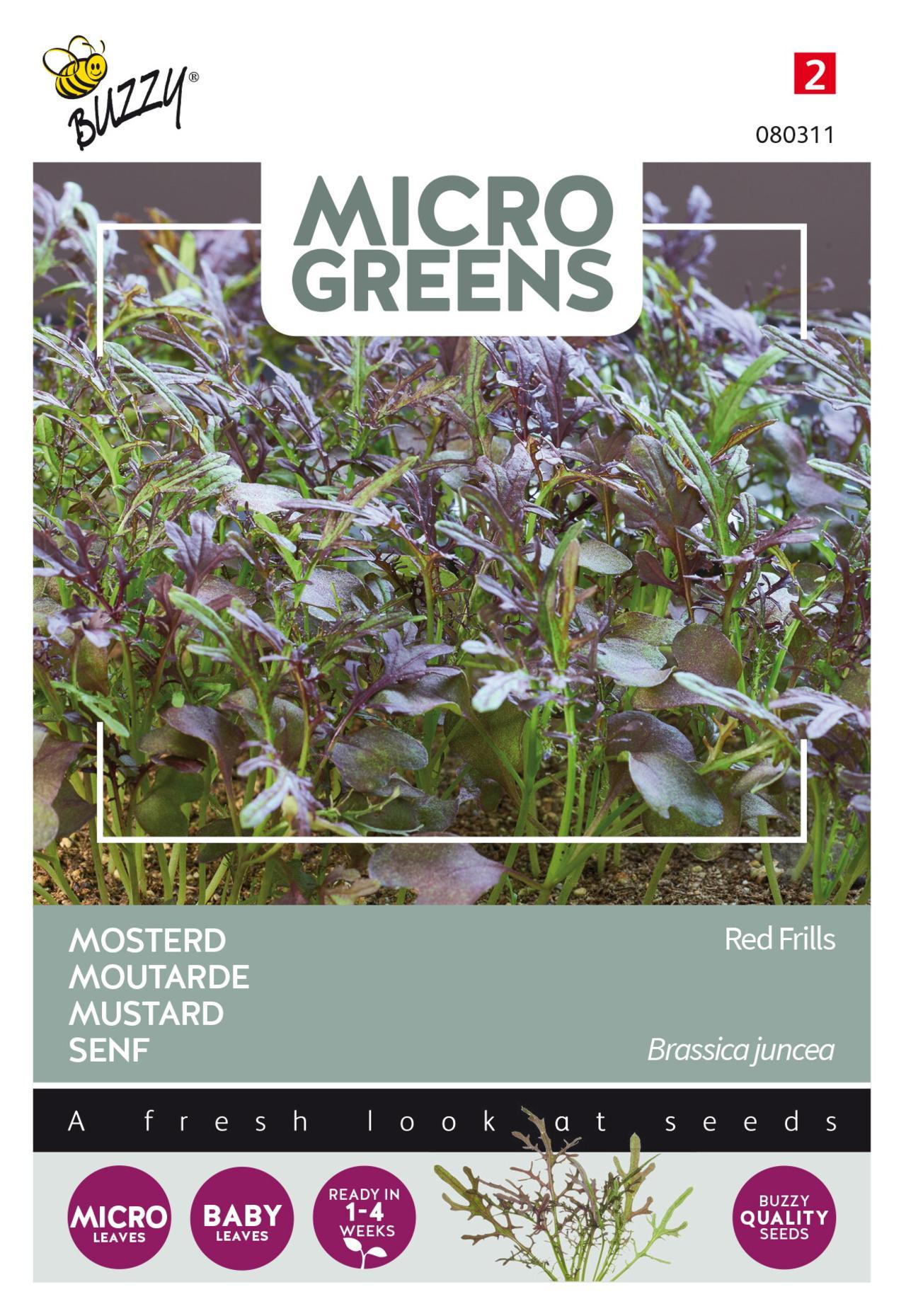 Brassica juncea 'Red Frills' (microgreens) plant