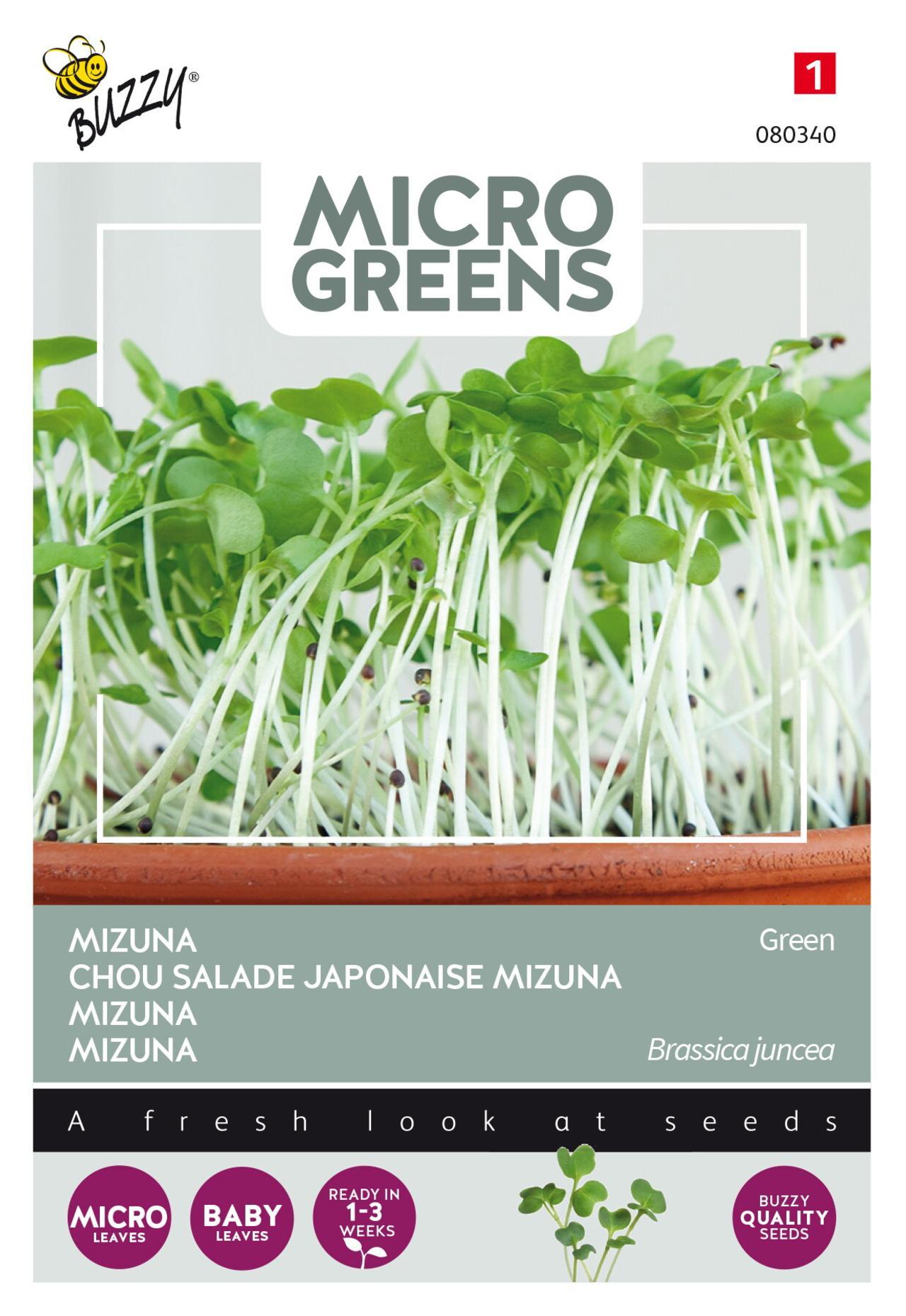 Brassica juncea var. japonica 'Green' (microgreens) plant
