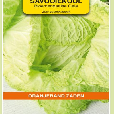 brassica-oleracea-bloemendaalse-gele