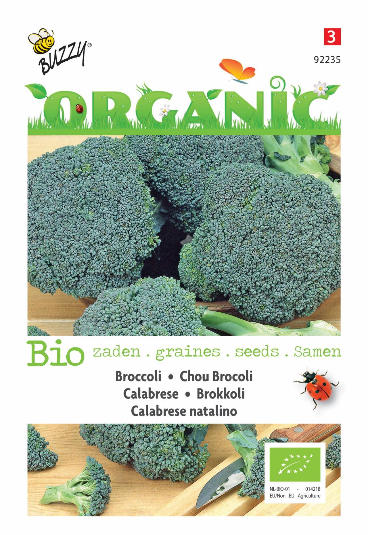 Brassica oleracea 'Calabrese natalino' (BIO) plant