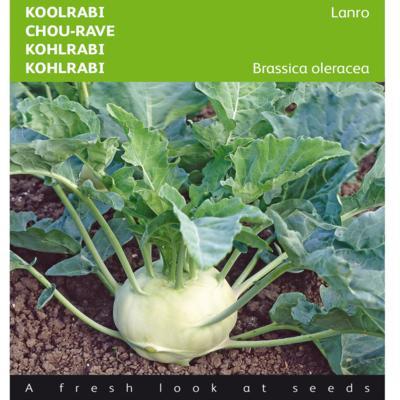 brassica-oleracea-convar-acephala-alef-var-gongylodes-lanro