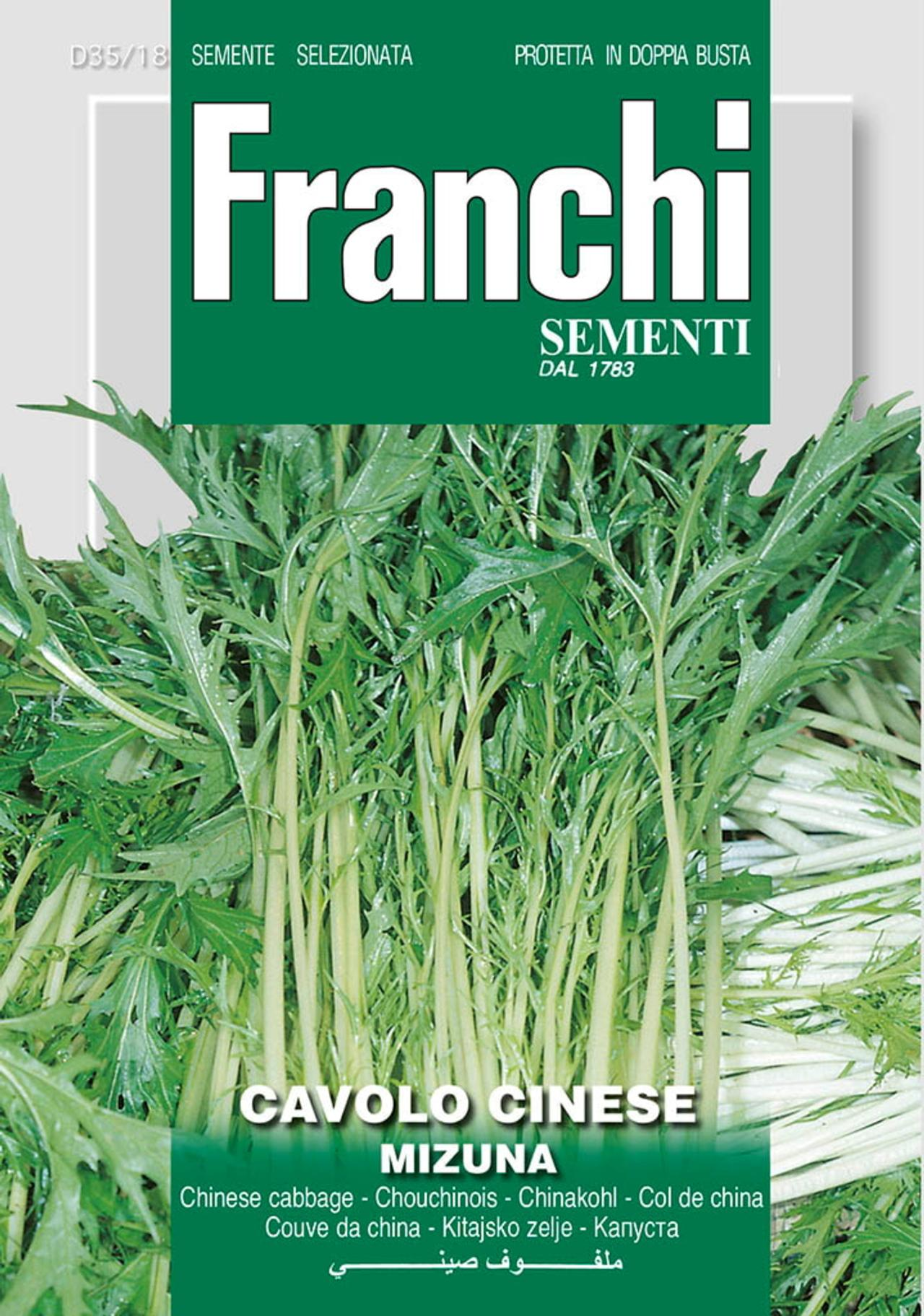 Brassica oleracea convar. acephala 'Mizuna' plant