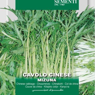 brassica-oleracea-convar-acephala-mizuna