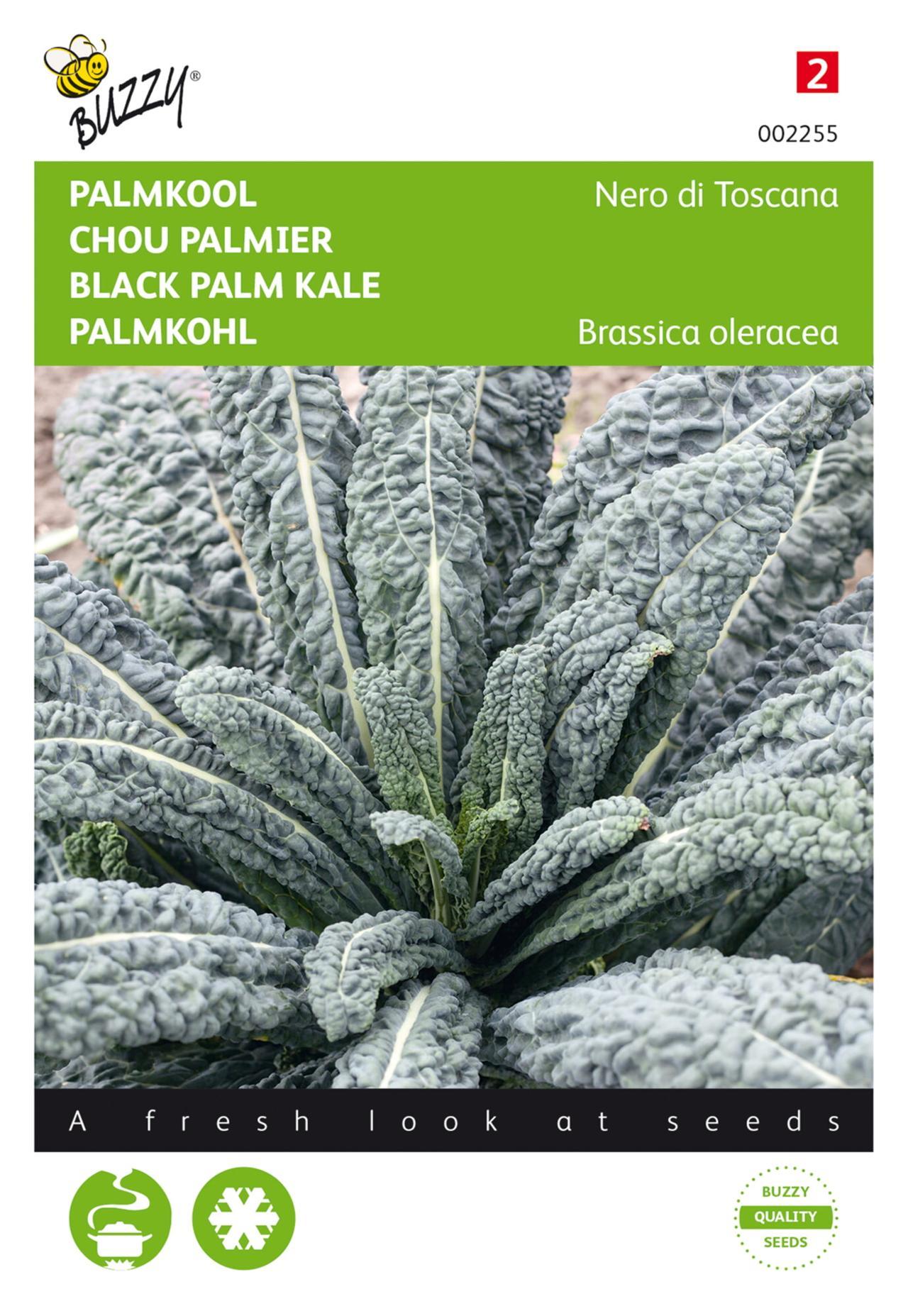 Brassica oleracea convar. acephala 'Nero di Toscana' plant