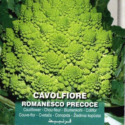 brassica-oleracea-convar-botrytis-var-botrytis-romanesco