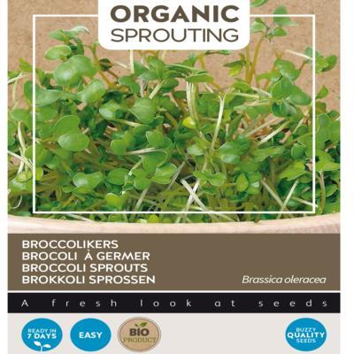 brassica-oleracea-convar-botrytis-var-italica-bio