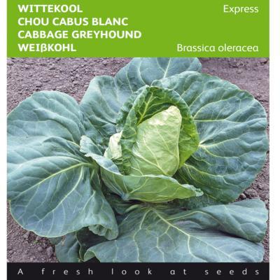 brassica-oleracea-express