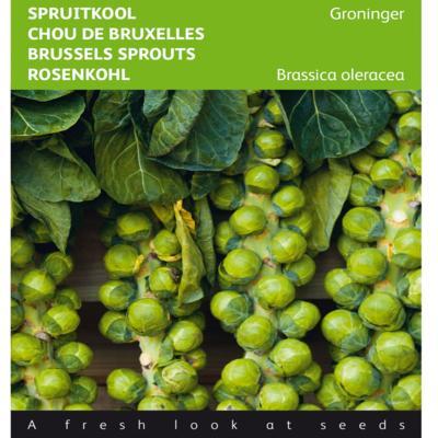 brassica-oleracea-groninger