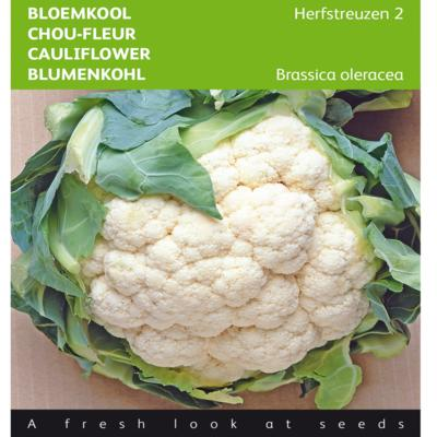 brassica-oleracea-herfstreuzen-2