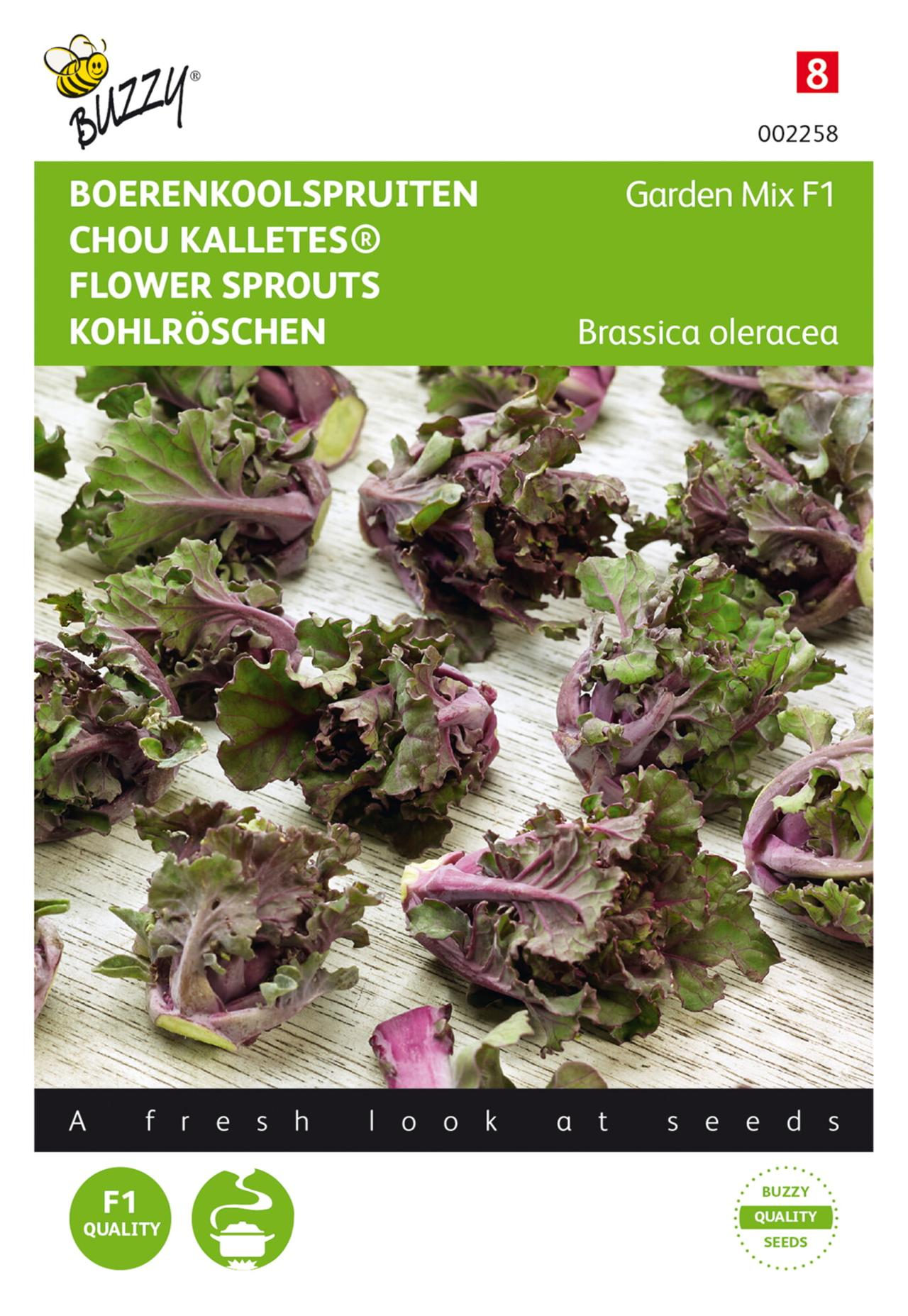 Brassica oleracea 'Kalettes® Garden Mix F1' plant
