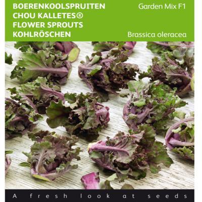 brassica-oleracea-kalettes-garden-mix-f1