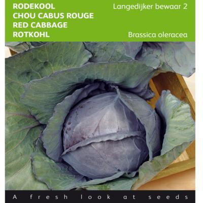 brassica-oleracea-langedijker-bewaar-2