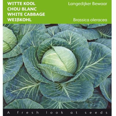 brassica-oleracea-langedijker