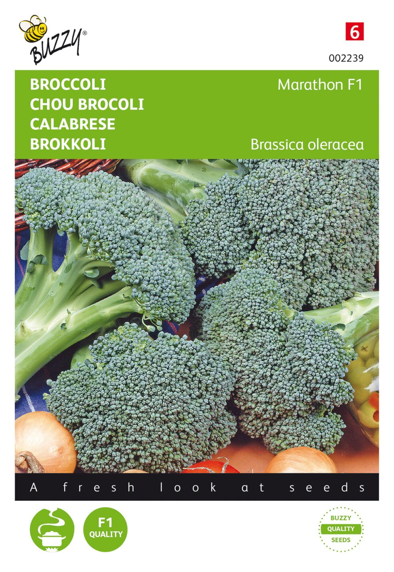 Brassica oleracea 'Marathon F1' plant