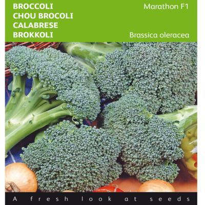 brassica-oleracea-marathon-f1