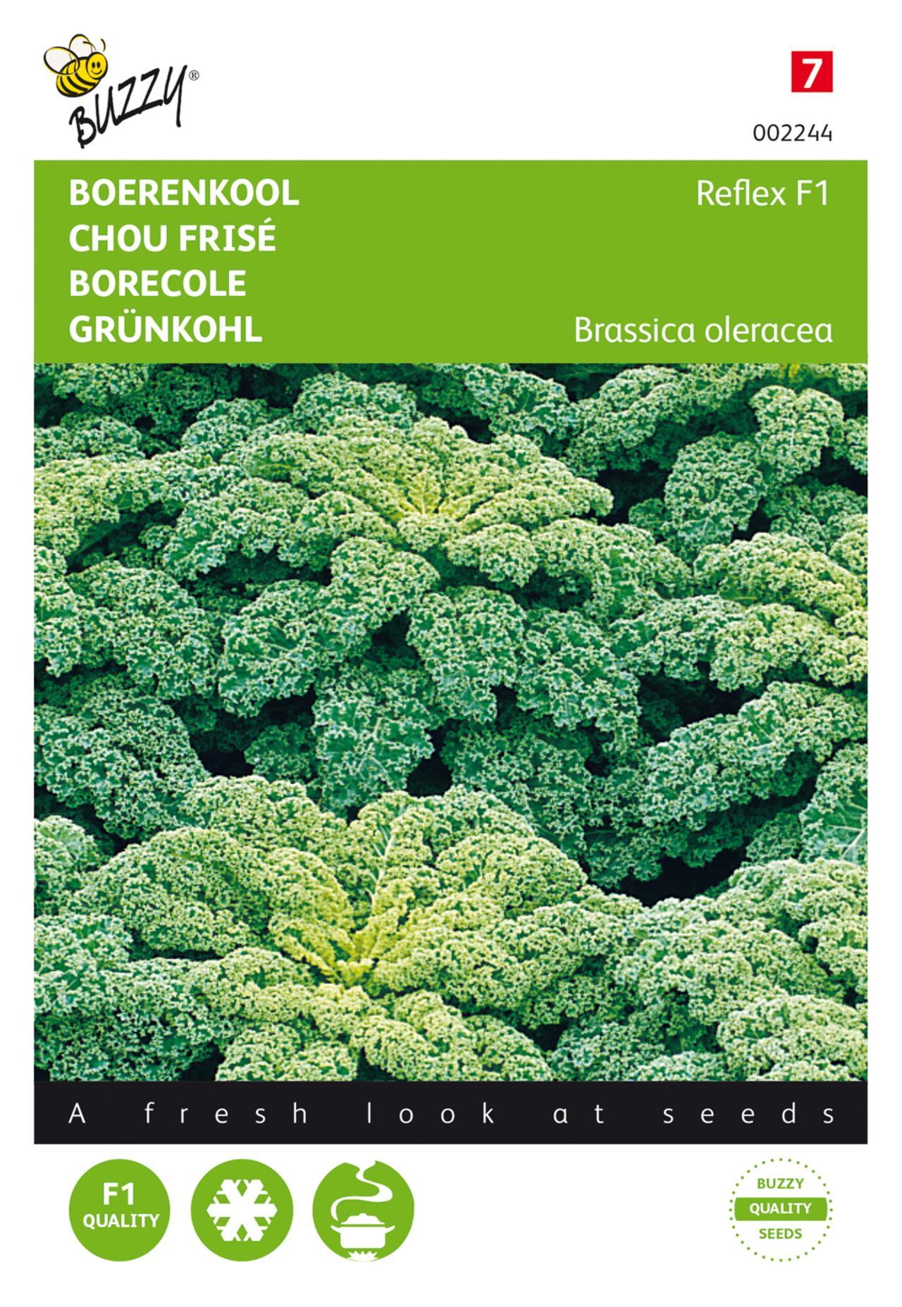 Brassica oleracea 'Reflex F1' plant