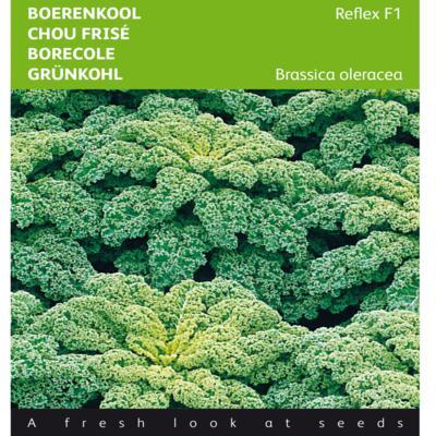 brassica-oleracea-reflex-f1