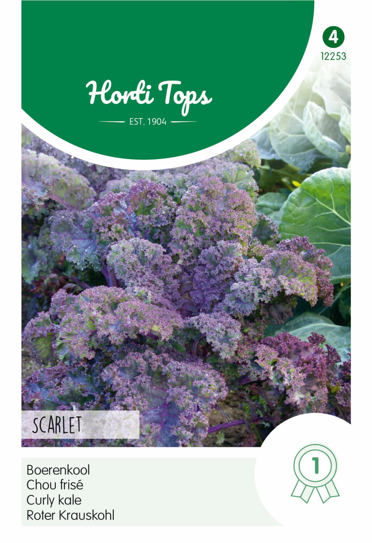 Brassica oleracea 'Scarlet' plant