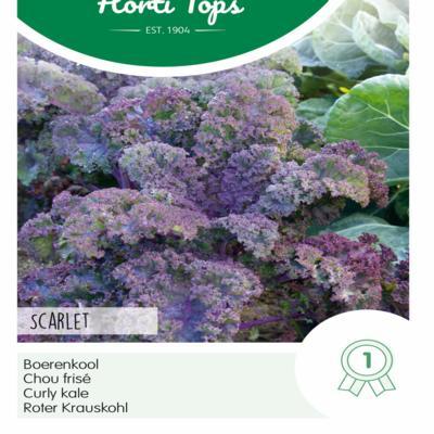 brassica-oleracea-scarlet