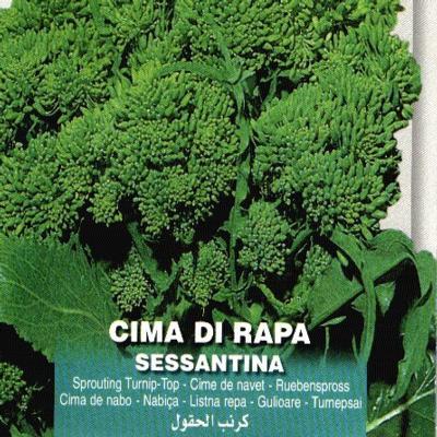 brassica-oleracea-sessantina