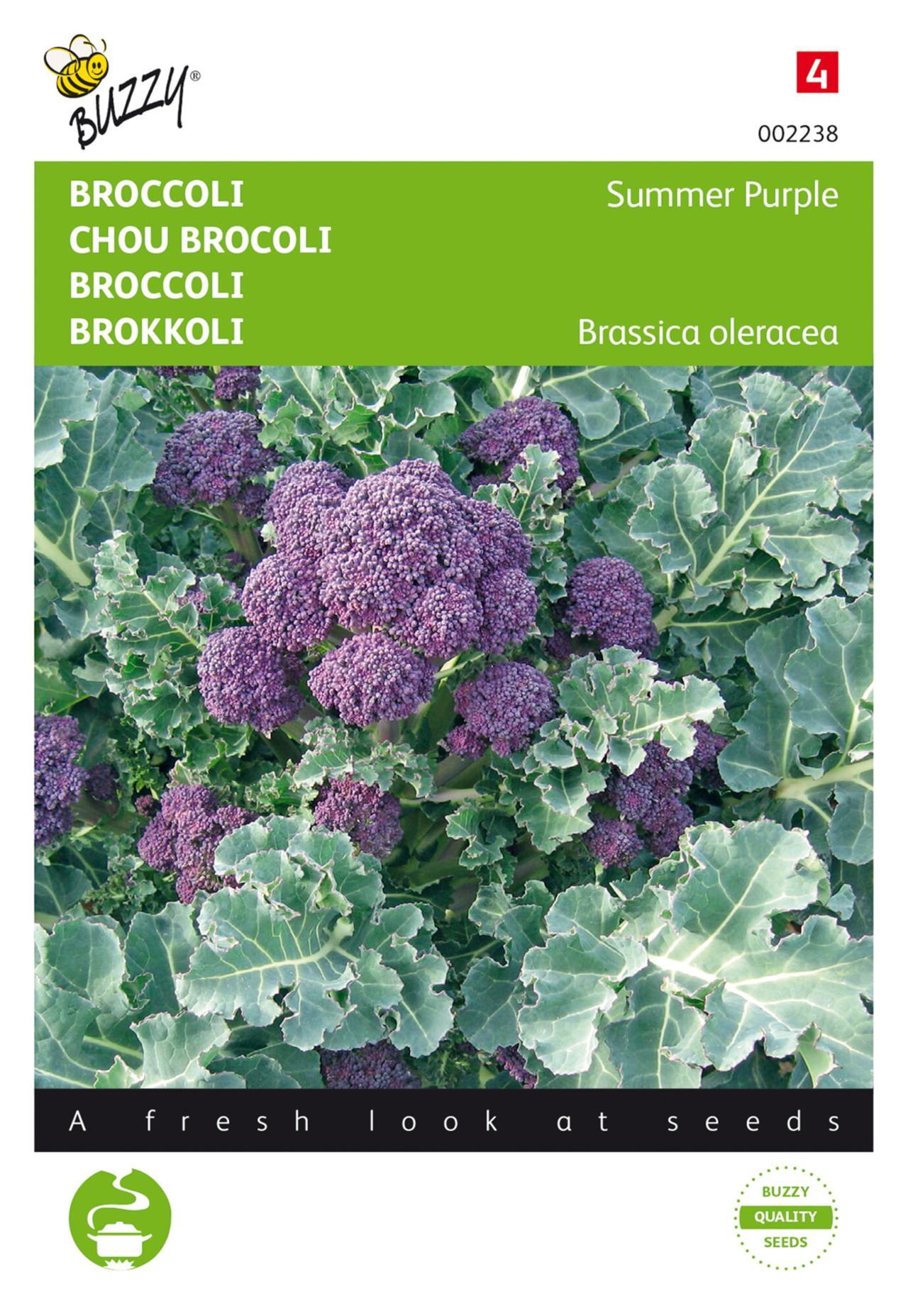 Brassica oleracea 'Summer Purple' plant