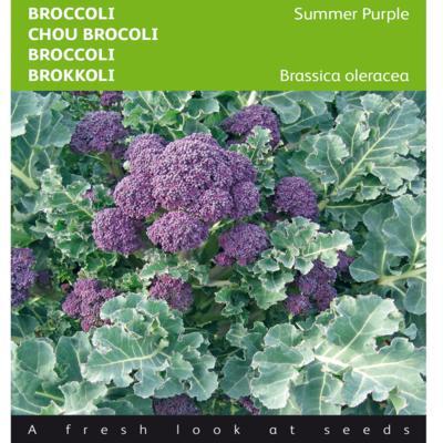 brassica-oleracea-summer-purple