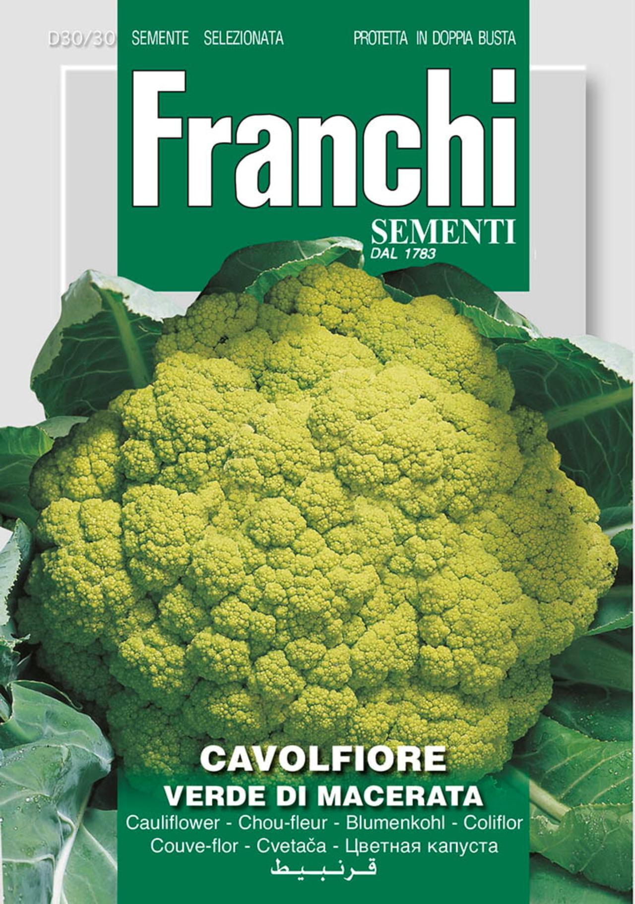 Brassica oleracea 'Verde de Macerata' plant