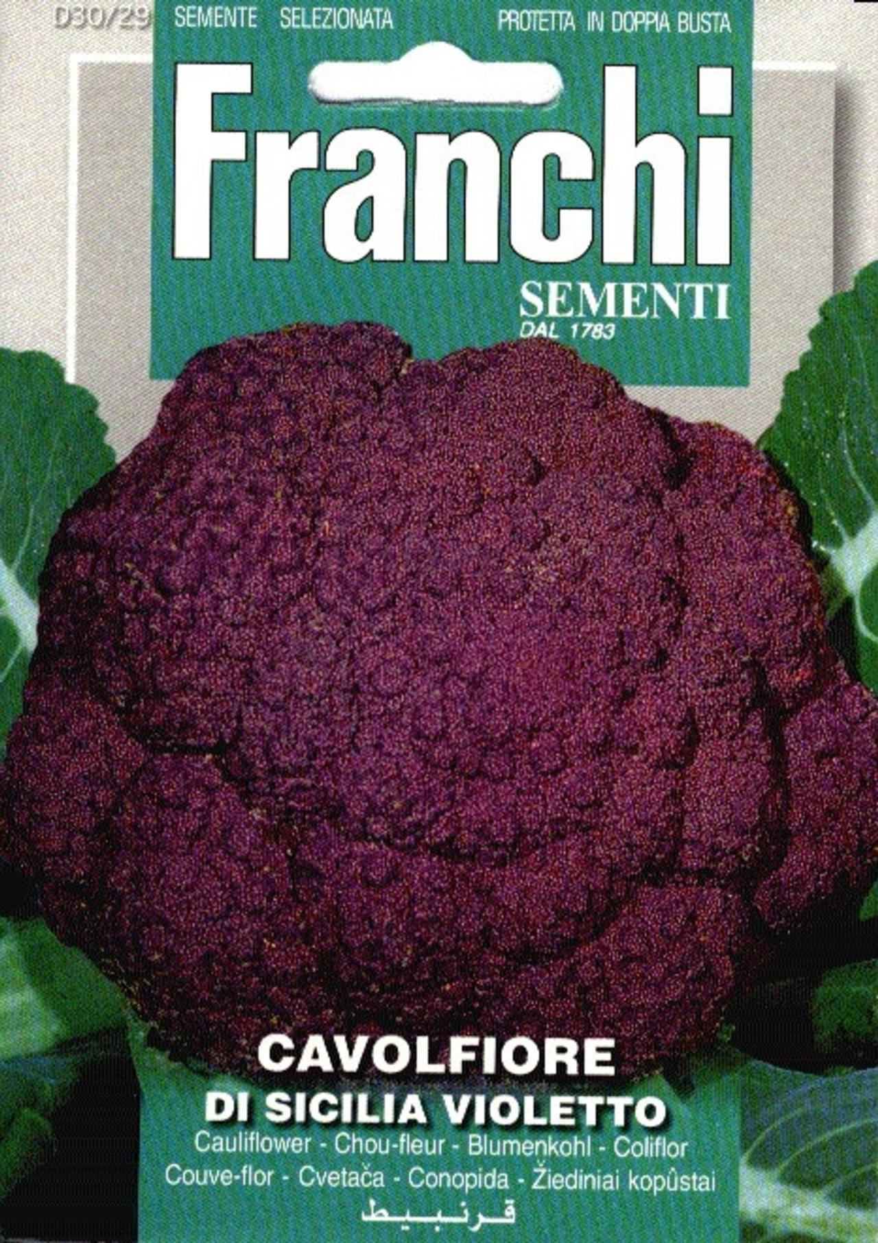 Brassica oleracea 'Violetto' plant