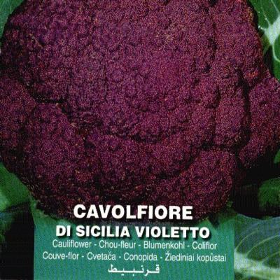 brassica-oleracea-violetto