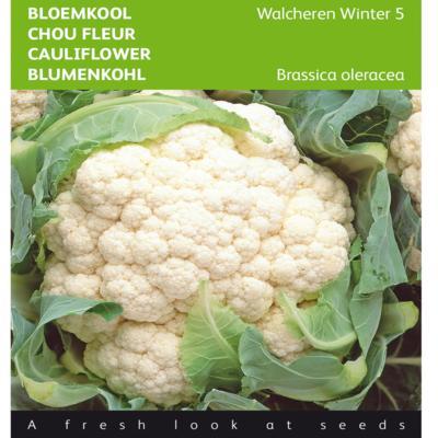 brassica-oleracea-walcheren-winter-5