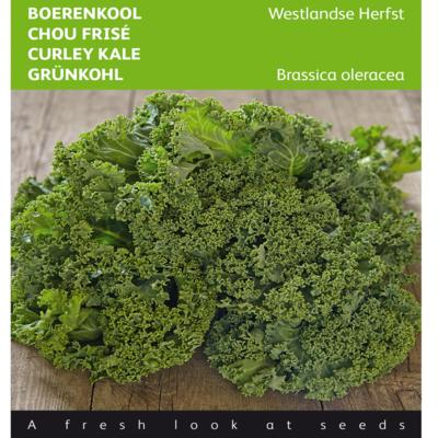 brassica-oleracea-westlandse-herfst