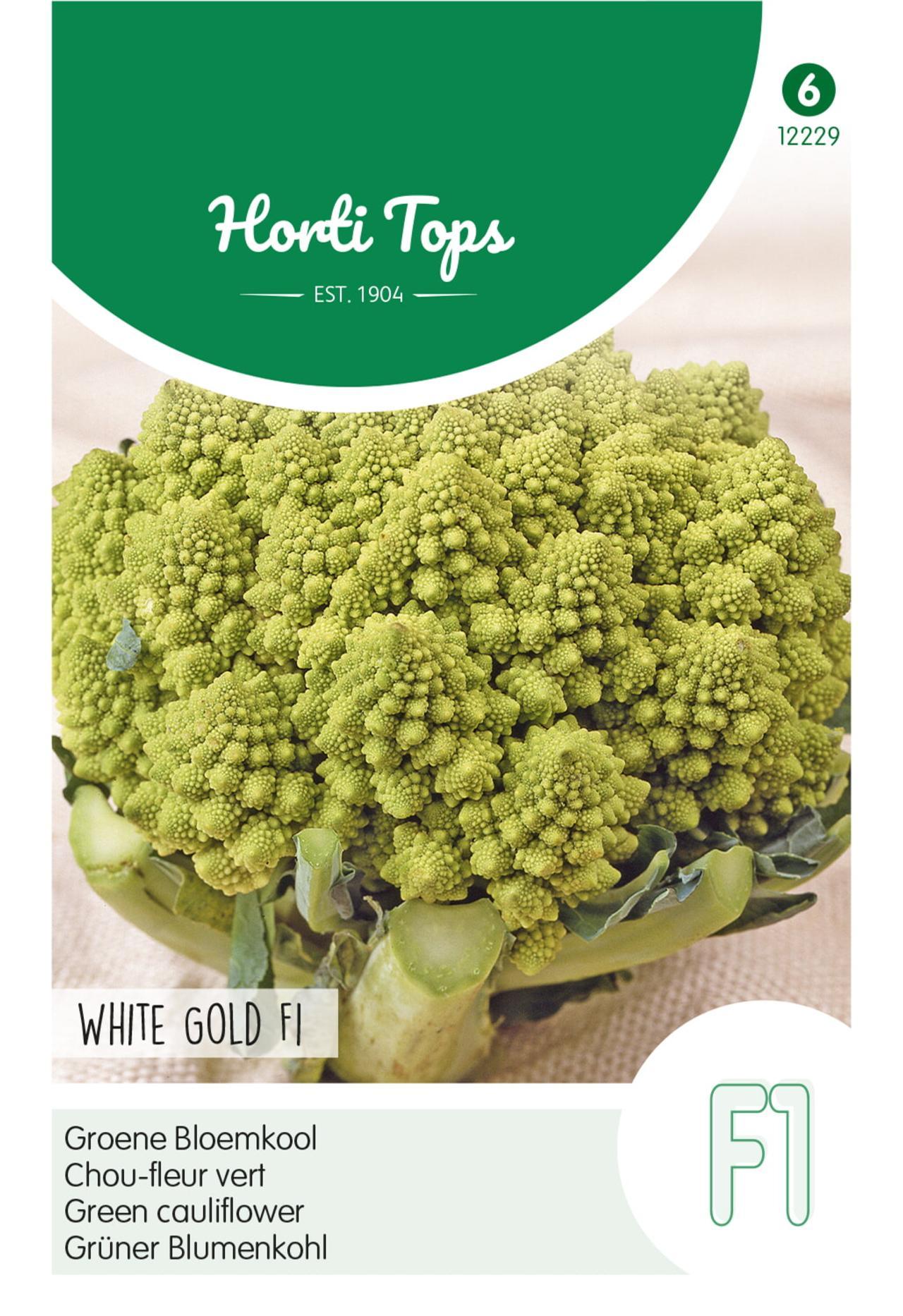 Brassica oleracea 'White Gold F1' plant