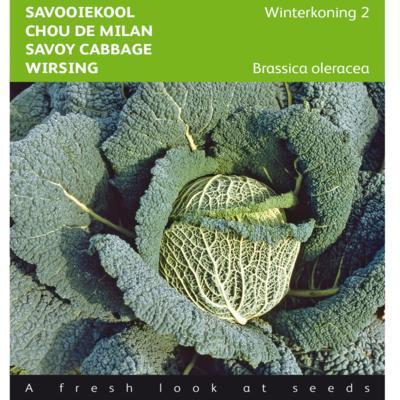 brassica-oleracea-winterkoning-2