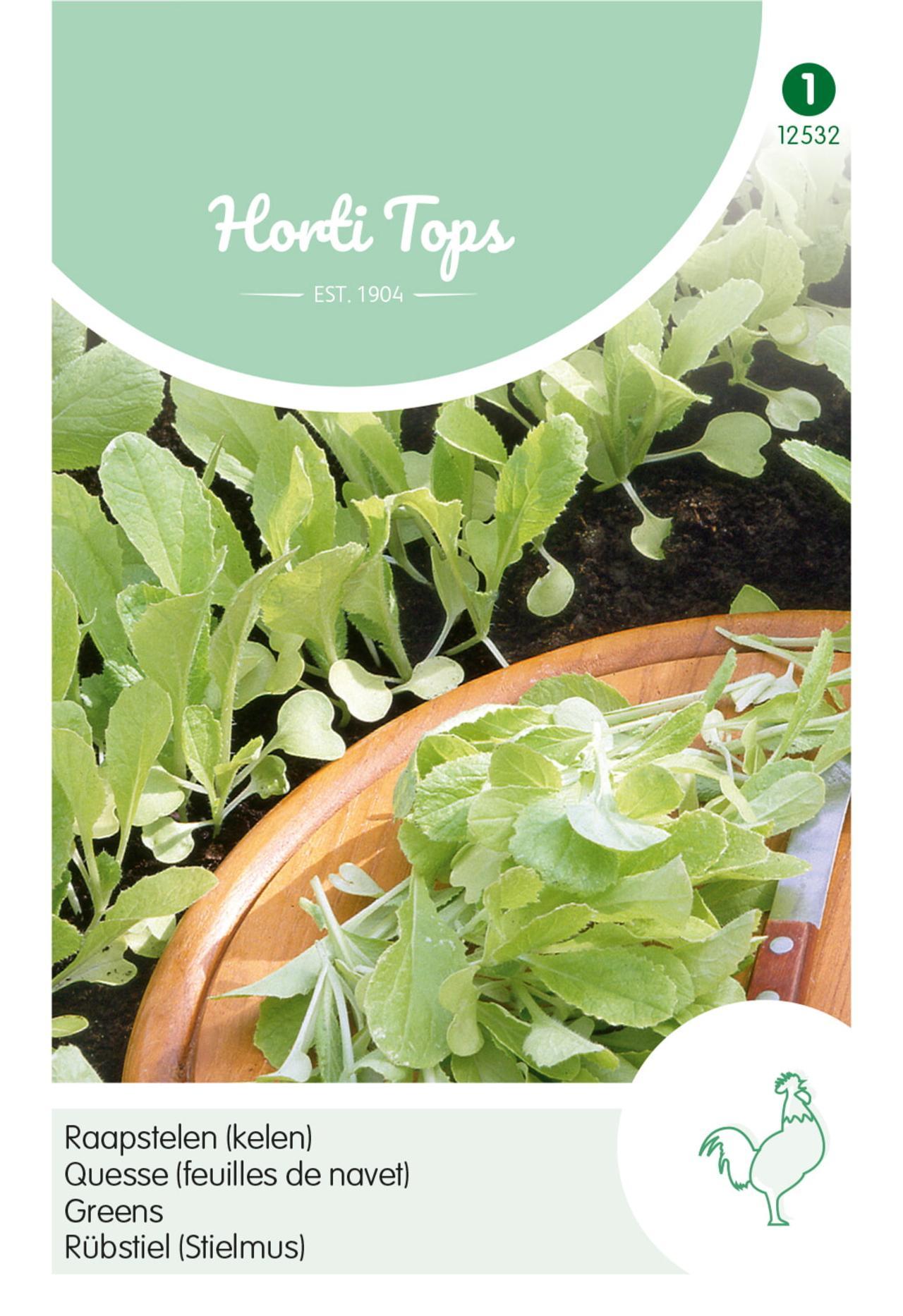 Brassica pekinensis 'Gele' plant