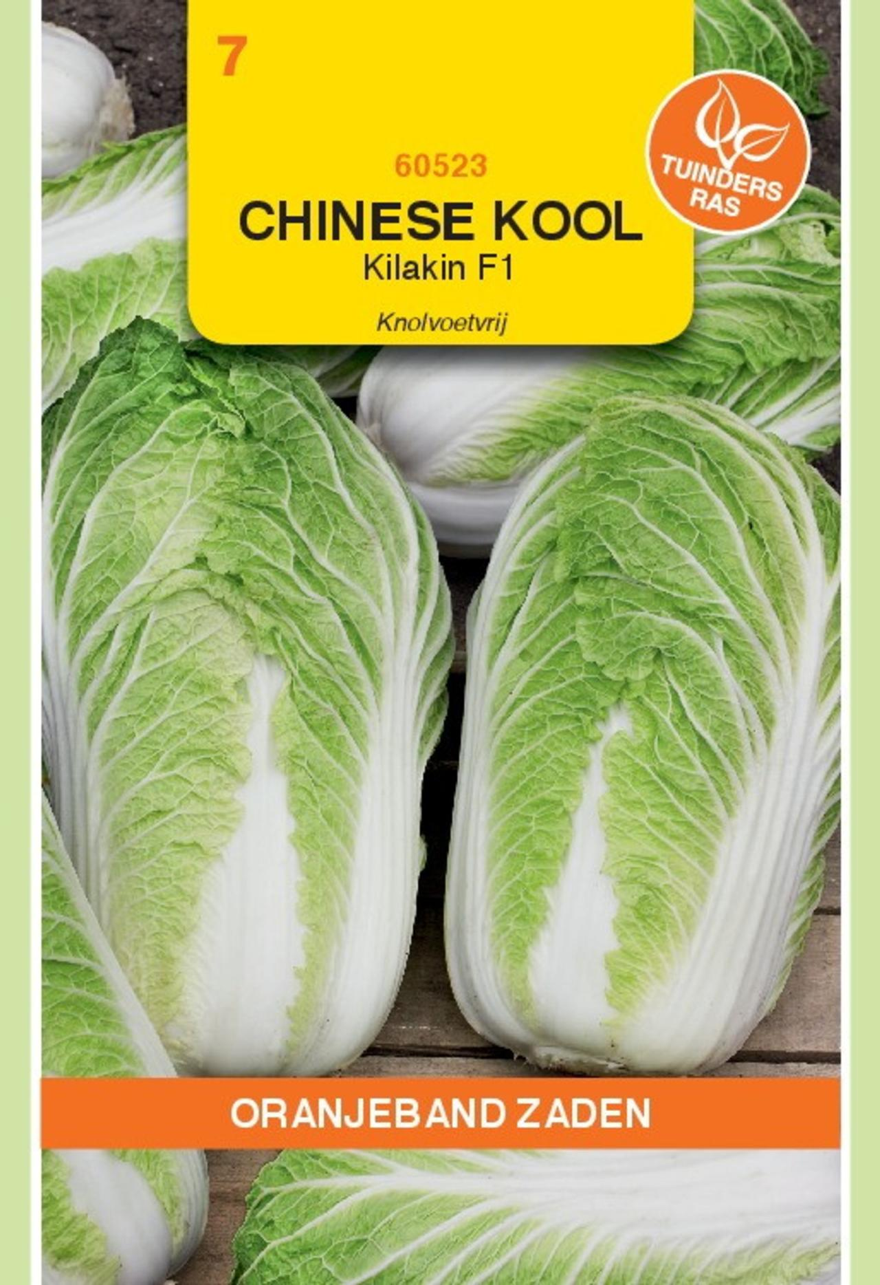 Brassica pekinensis 'Kilakin F1' plant